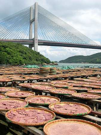 Photo of shrimp paste drying in the sun - Hong Kong