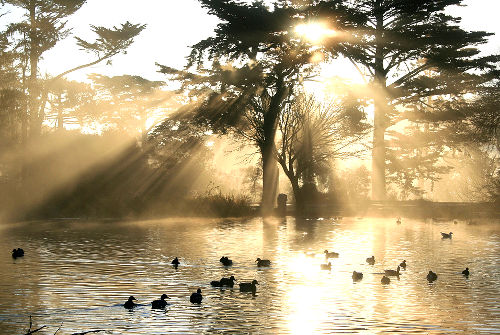 Photo of Stowe Lake in Golden Gate Park, San Francisco Caliornia