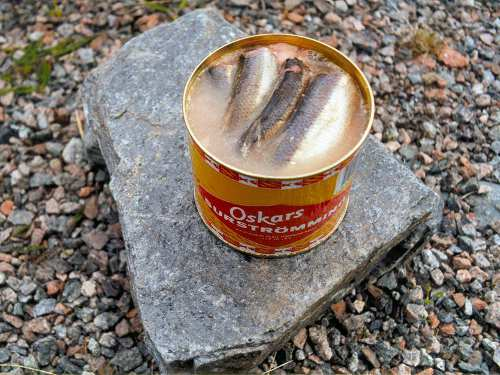Photo of surströmming, Swedish rotten herring